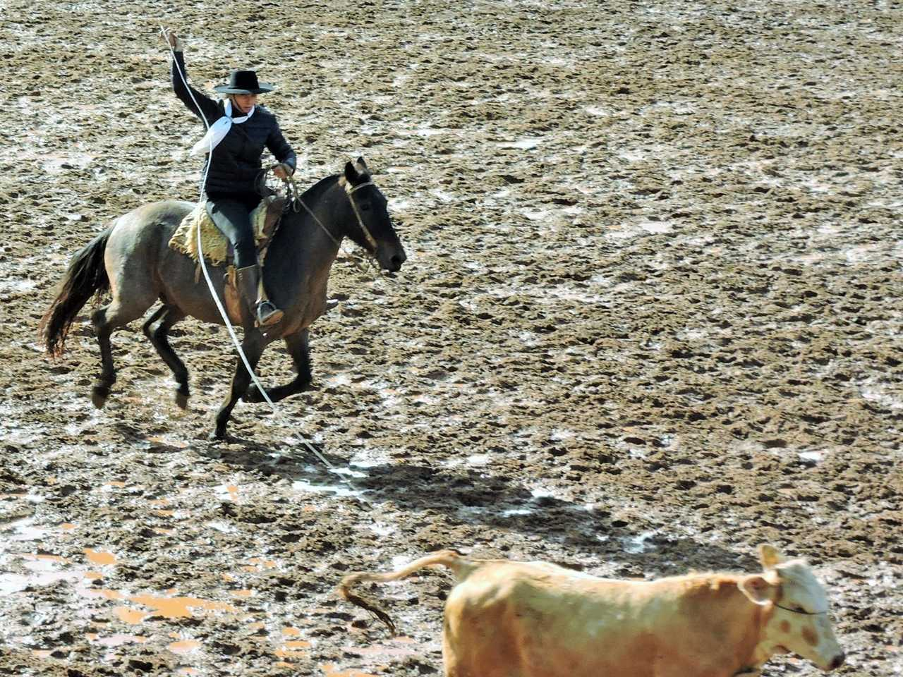 1422ed9a6a º Rodeio quero quero (8).jpg ...