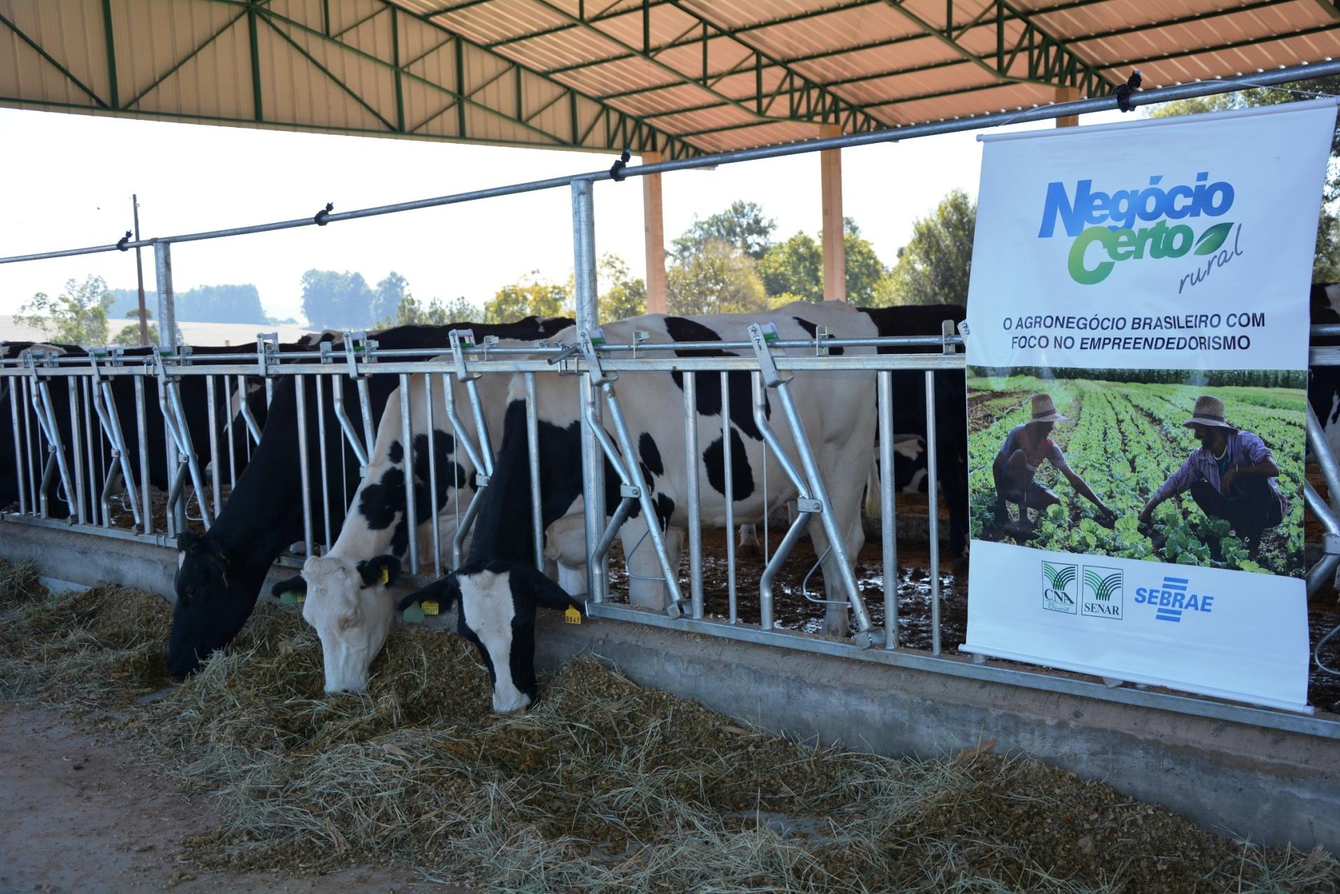 Di Online Produtor Rural De Xanxer Inova Na Produ O De Leite Na  -> Planta De Sala De Ordenha